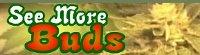 See More Buds Le site officiel du DVD See More Buds, une bible de culture cannabique