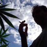 La répression contre le cannabis coûte 300 M€ par an selon un rapport./ Photo DDM, Nicolas Tucat.